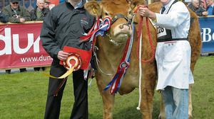 Limousin heifer, Millbrook Ginger Spice, retained her title as Balmoral's inter-breed beef champion at the new showgrounds in Lisburn last week. Pictured is Dunbia's David Chestnut presenting the award to owner, Meath's William Smith. The show's move from central Belfast to the 64ac site of the notorious Maze prison proved a great success with record crowds over three days  Photo: Aaron McCracken/Harrisons