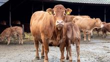 Actions: Payments of up to €90/cow are available for actions such as weighing, vaccinating and faecal sampling.