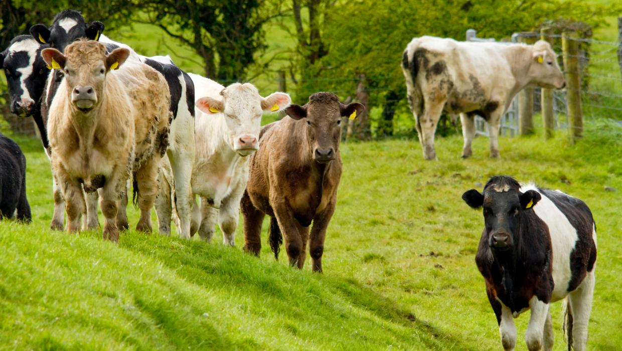 Eating less meat and farming with fewer chemicals needed to curb global warming - UN report