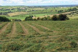 Wilting the grass properly allows for better formed bales with higher dry matter digestability.