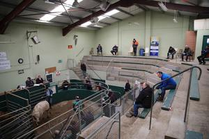 Social distancing selling: the scene at Kenmare Mart, Co Kerry, last weekend. Photo: Valerie O'Sullivan