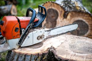 In some cases, trees can be felled without a licence and no prior notification is required.