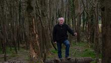 Losses: Paddy Stokes in his ash plantation where he says between 80 and 90pc of the trees have been infected by Ash dieback. Photo: John D Kelly