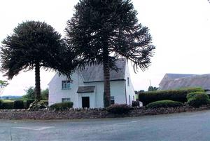 Greenlane House includes a two-bedroom house set behind two monkey-puzzle trees