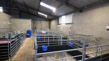Investment: The Earles have upgraded all their farm buildings including this top quality lambing shed
