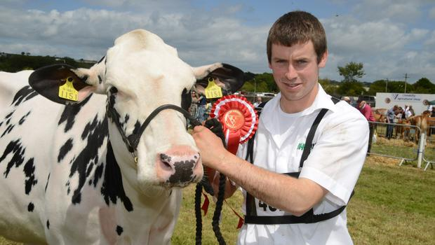 """Gerry O'Driscoll from Timoleague with the winner of the West Cork Junior champion friesian """"Shuttle my fair lady"""". Picture Denis Boyle"""