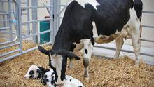 Every animal in your herd should get a high level of care. Planning a standard operating procedure with your vet for the main tasks will help you to do this.