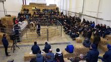 The Glenmore Organic Dairy Herd sale at An Grianán Estate on Friday. Photo: Clive Wasson