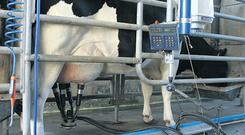 Milk production has been maintained due to the good weather during our Indian summer