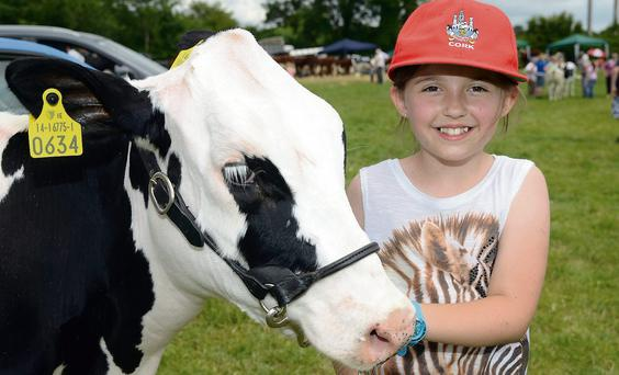 Great day: Minding her calf at the annual show at Dunmanway Co Cork was Dervla O'Donovan (10)