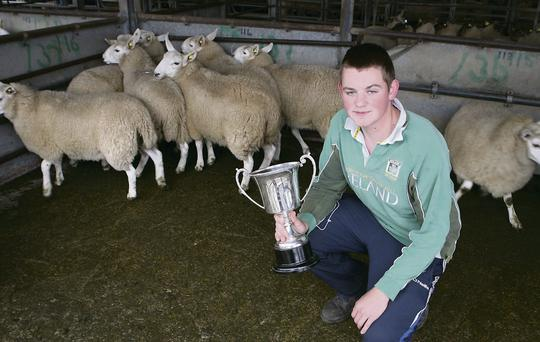 Sean Butler from Ballon had the best Cheviot Ewe Lambs at Tullow Sheep Breeders show and sale last week