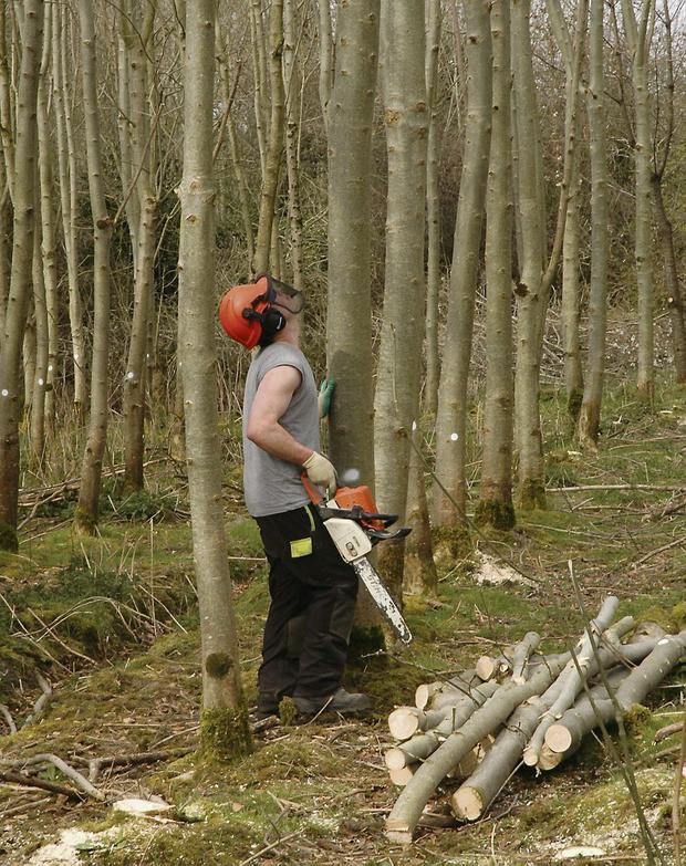 The Forestry Bill 2013 is now at an advanced stage and if passed into law will shape forestry regulation and practice for a generation at the very least