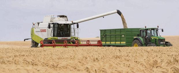 Despite a difficult sowing season and a cold start the 2013 crop produced decent yields