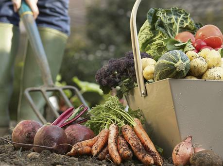 CONCERN: Government plans to increase the amount of locally grown produce it buys through hospitals and other public bodies appear to have failed spectacularly so far