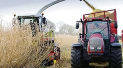 More than 1,700ac of miscanthus have been ploughed in over the past three years as a lack of market demand for the crop has left farmers nursing significant losses.