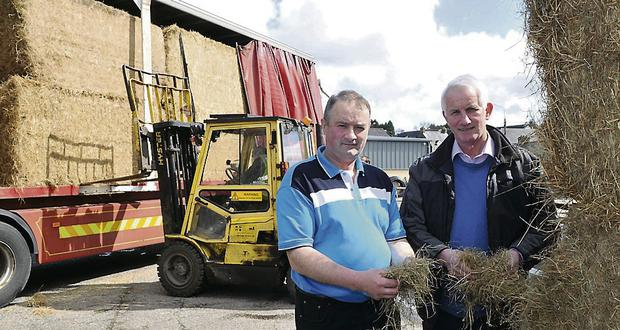With the fodder shortage biting hard and a slow start to spring grass, Dairygold sourced quality hay in the UK to sell it at cost to help farmers feed stock while awaiting grass growth. Over the week-end Dairygold Chairman Bertie O¿ Leary and Jim Canty, Dairygold Area Manager welcomed UK hay to mid-Cork.