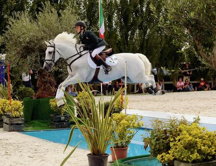 LEAP OF FAITH: The success of Connemara ponies like Sillogue Darkie, above, ridden by Michael Duffy, at the European Championships, has proven the ability of Ireland's native pony to reach the top level of international competition and driven demand for performance Connemaras. Photo: Horse Sport Ireland.