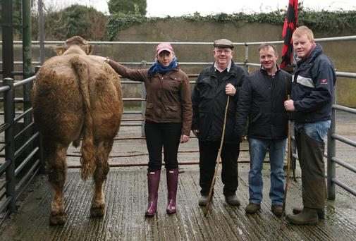 BEST IN SHOW: Sharon Rothwell from Tinahely with the Best Beef Bullock at Tullow Mart Show and Sale last week. Also pictured (left to right) are Alo Corcoran, Stradbally, Paddy Murphy, New Ross and mart manager Eric Driver. Photo: Karl Mc Donough.