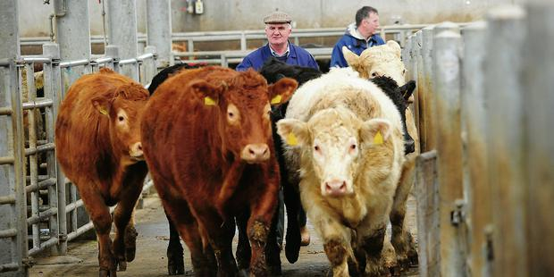 Brexit dampens Irish food and drink exports by €570m