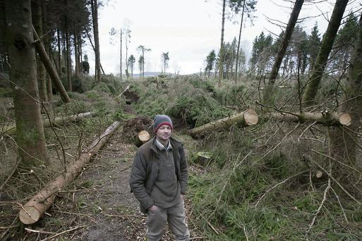 Thomas Cosby stands where about 300 evergreen trees were floored by Storm Darwin atStradbally Estate, Co. Laois. Photo: Alf Harvey/HR Photo.
