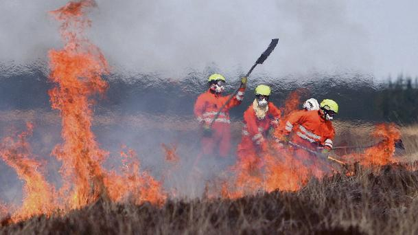 Currently section 40 of the Wildlife Act 1976, as amended, prohibits the cutting, grubbing, burning or destruction of vegetation, with certain strict exemptions, from 1 March to 31 August.