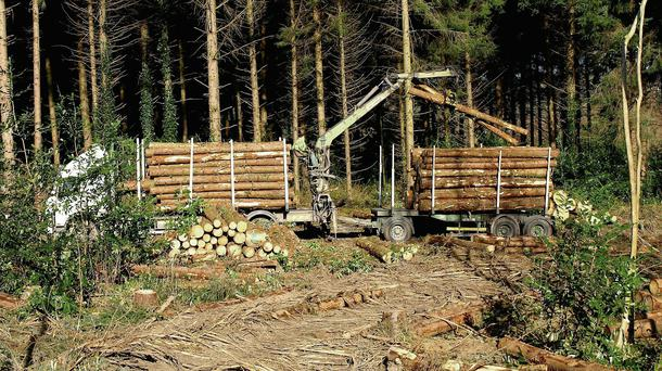 Reaction from the forestry industry has been positive.