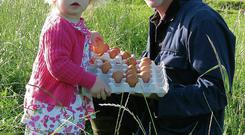 Egg-cellent: David Butler with his daughter Kate aged 2, collecting eggs