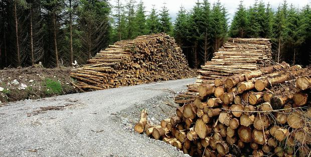METICULOUS: Paying close attention to detail is vital for those aiming to run a successful forestry operation