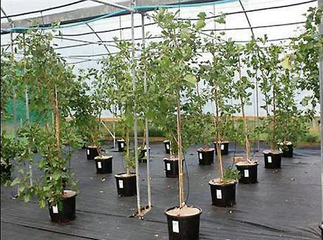 REPLENISHED: Teagasc's new stock of alder and birch