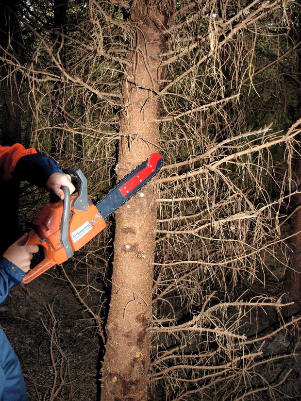 Kickback: A common cause of injuries when working chainsaws is kickback when the chain strikes a hard object