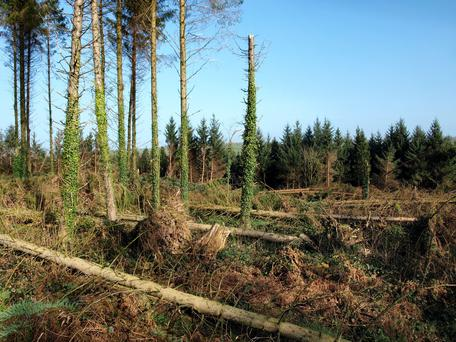 Ireland has the healthiest forests in Europe