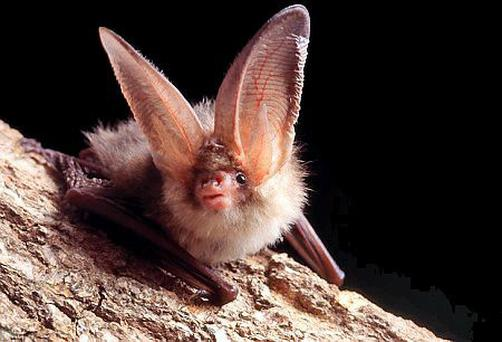 Bats are vital pest controllers for farmers