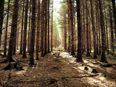 Treemetrics will carry out forestry monitoring.