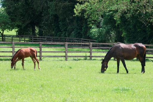 Parasite control in horse requires careful planning