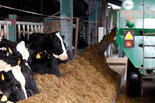 Nutrition: Getting your silage tested is a valuable first step to aid you in your feeding decisions this winter.