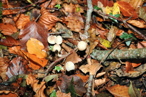 Mushrooms of every shapes and size thrive on the forest floor