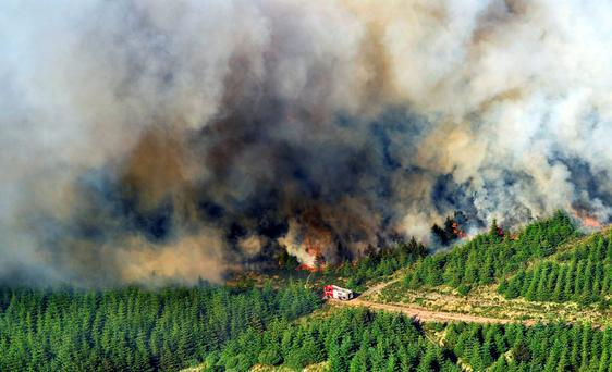 Threat: Forestry growers and insurers are concerned that the burning of commonage land could spark forest fires.