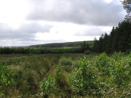 Ireland is falling far short of tree planting targets