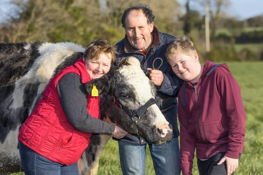 Sean and Breda Murphy and their son Gearóid pictured with 20-year-old Knocktown Prelude Earle, possibly the oldest pedigree milker in Ireland. The Murphys farm at Rathfardon, Clonroche, Enniscorthy, Co Wexford. Photo: Patrick Browne