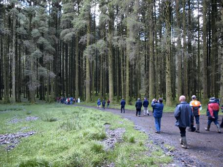 Green Cure: The concept of 'forest bathing' has been valued for centuries in Asia as a means of preventing illness and aiding recovery.