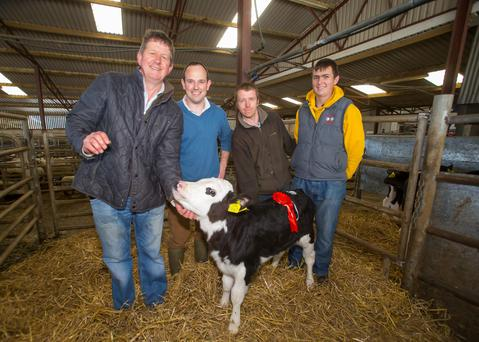 The best female calf at the Irish Hereford Society Calf Promotion in New Ross was owned by Dan Murphy from Ballygunner. Pictured at the presentation of the award were: Glenn Jacob of the Irish Hereford Society, Richard Kirwan, New Ross mart manager, Tommy