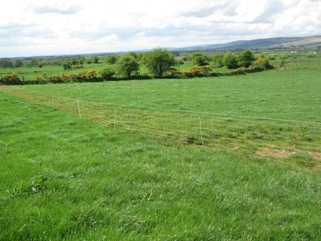Divisions: Sean uses electric wire mesh to divide the paddocks on his Co Sligo farm