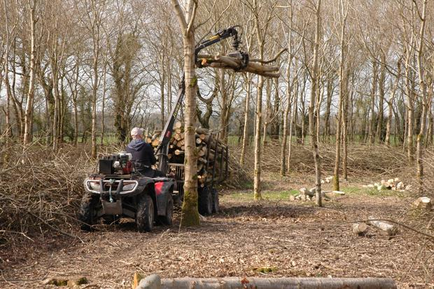Clearance: Joe Barry's oak woods after thinning