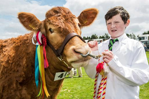 'Ardnacrusha Hilarious', the Limousin champion and interbreed champion at last weekend's Bandon show, is pictured with Daniel Moloney, Ardnacrusha, Co. Clare