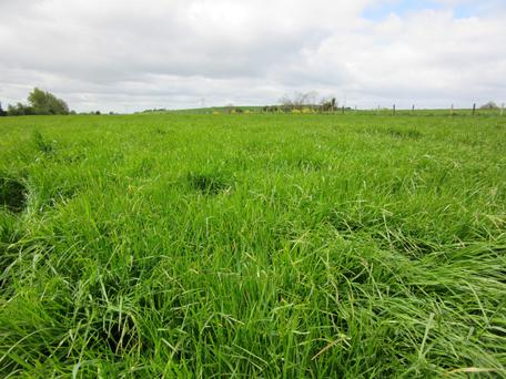 Grassland: With tillage in the rotation there is a lot of grassland with high ryegrass content for Eamon Kirk to utilise