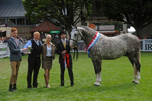 Jimmy and Edel Quinn receive the perpetual champion trophy in 2013 from Andrew Cosgrove (Parkbytext, sponsor) after Cappa Cassanova's win at the RDS when shown by Seamus Sloyan