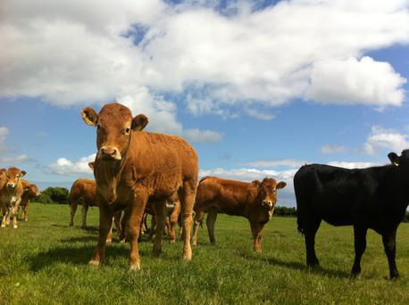 Threat: Agri leader warns that Johnes disease is 'another BSE' for Irish agriculture.