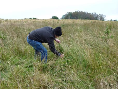 DO: Manual grass cleaning is sometimes a good option, especially for small areas or as demonstrated here where vegetation control was left very late