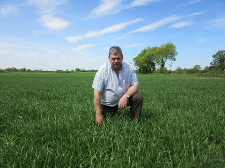 Ben Sweeney planted Triticale this spring and intends to harvest it for silage for winter feeding