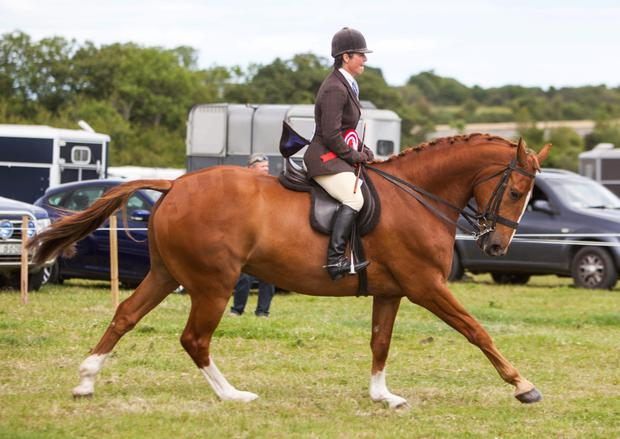 Movement is a key factor in achieving success in the show ring. Pictured above is Jane Bradbury on a lap of honour after Bloomfield Executive won the hunter championship at the recent Gorey Agricultural Show